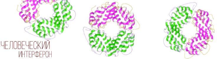 В организме активно синтезируется интерферон