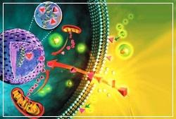 компоненты геля препятствуют транспортировке гидроксильных радикалов