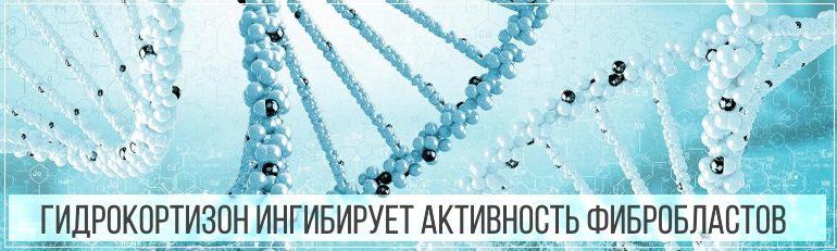 Гидрокортизон ингибирует активность фибробластов