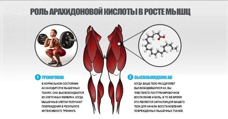 Роль арахидоновой кислоты