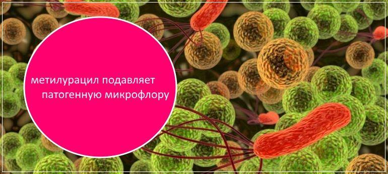 Метилурацил эффективно борется с болезнетворными микрооргаизмами