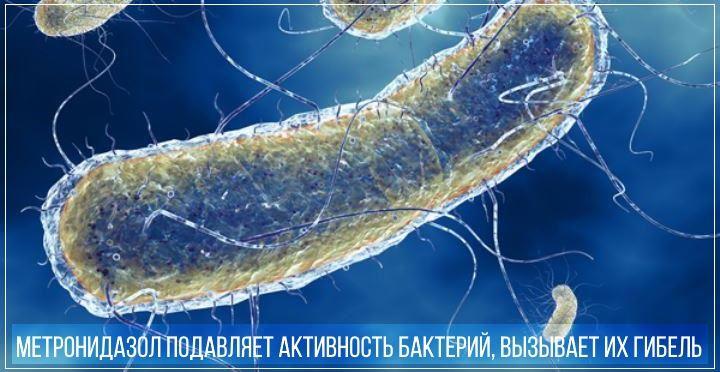 Метронидазол ингибирует синтез ДНК