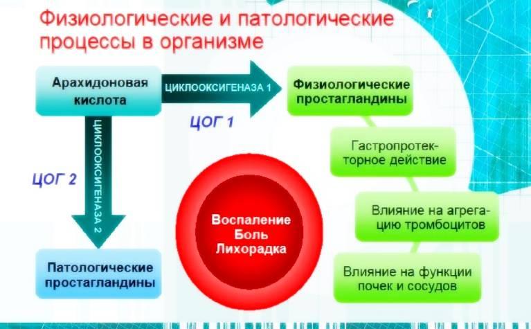 Механизм возникновения физиологических процессов в организме