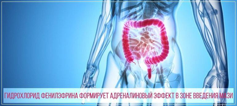 гидрохлорид фенилэфрина действует в прямой кишке