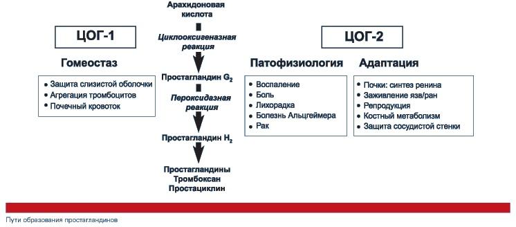 Как образуются простагландины