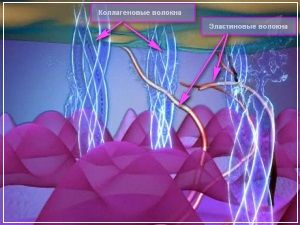 Солкосерил активизирует синтез коллагеновых волокон
