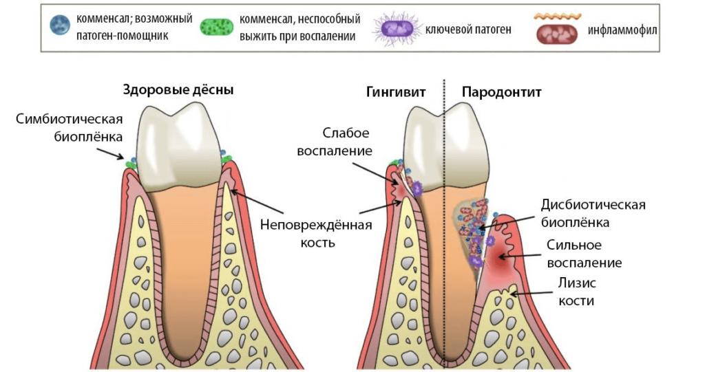 Препараты повышают сопротивляемость иммунитета к болезням