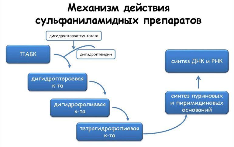 Механизм действия препаратов на основе сульфаниламидов