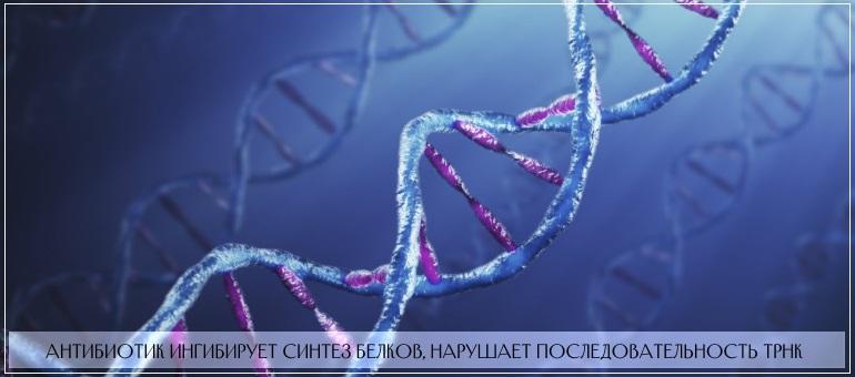 Бактробан ингибирует синтез белковых соединений в тРНК