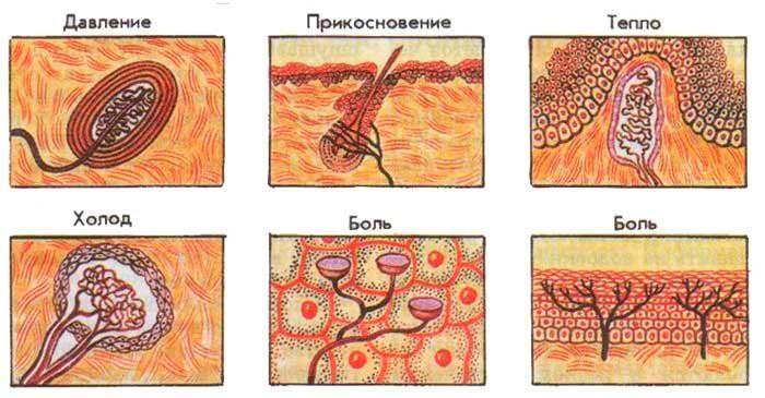 Мазь Доктор Мом раздражает рецепторы кожи, отвлекая их от болезненной симптоматики недуга