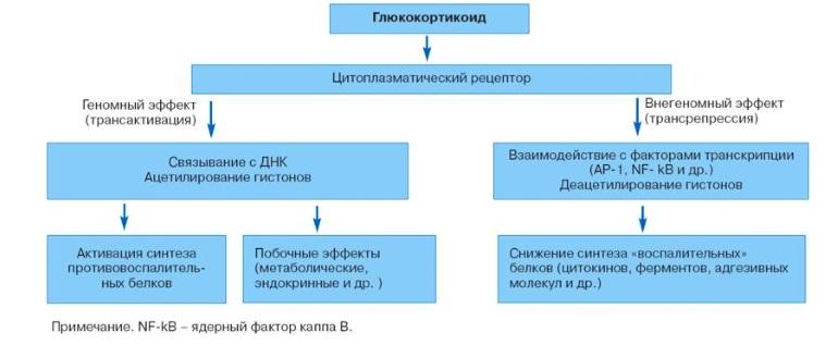Мазь Синафлан принадлежит к группе глюкокортикостероидов