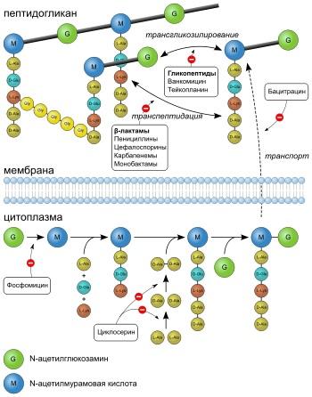 Тербинафин ингибирует скваленэпоксидазу