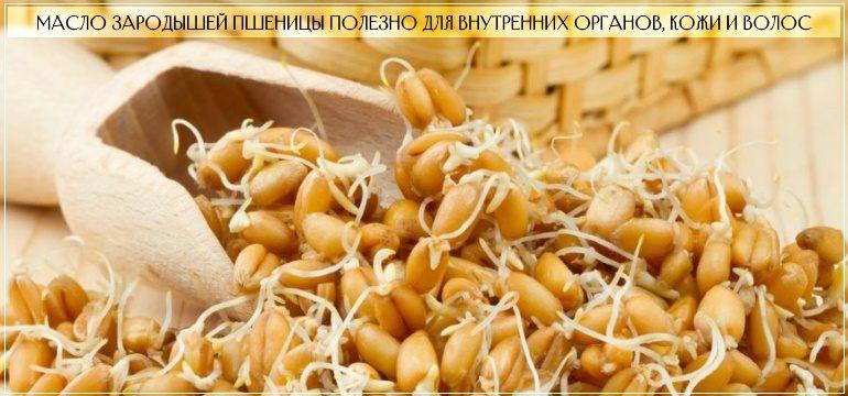 Польза от масла зародышей пшеницы