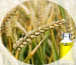 Масло зародышей пшеницы активизирует процессы регенерации поврежденных тканей на клеточном уровне