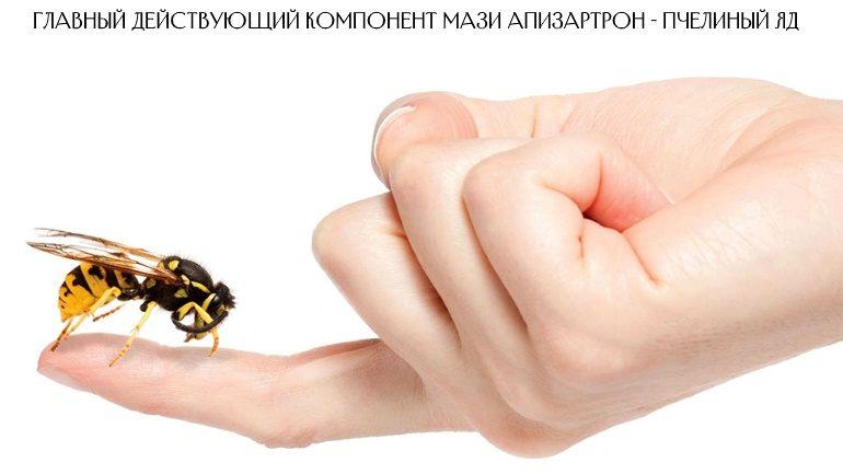 Главный действующий компонент мази Апизартрон - пчелиный яд