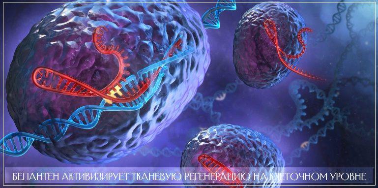 Бепантен воздействует на поврежденные ткани на клеточном уровне