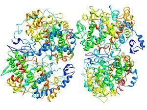 Активные вещества геля Амелотекс направленно ингибируют активность ЦОГ-3