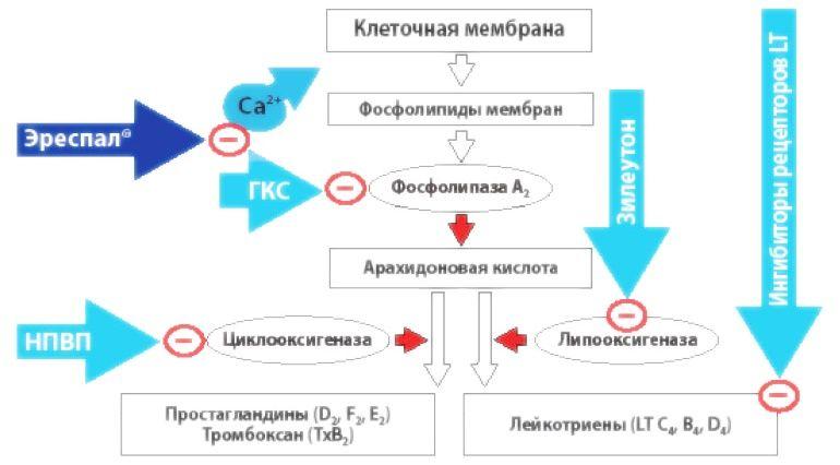 Как осуществляется биохимический процесс метаболизма арахидоновой кислоты