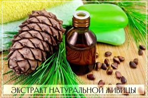 Натуральная живица - главный действующий компонент мази Биопин