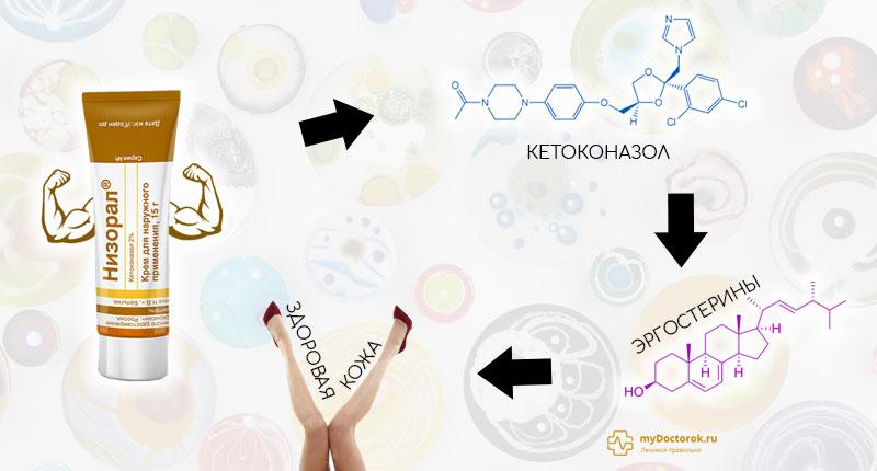 Схема действия препарата