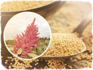 амарантовое семя